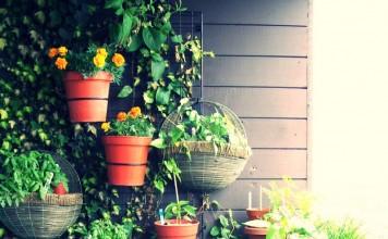 Balkonda Yetiştirilebilecek Bitkiler