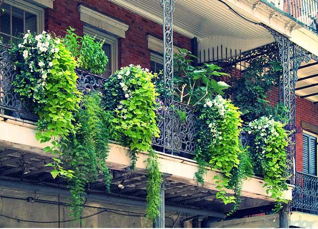 Balkon Çiçekleri Hangileridir ?